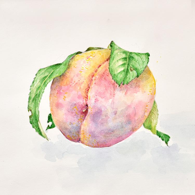 ボタニカルアート(植物画)